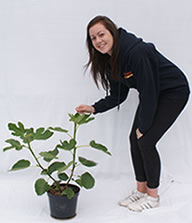 Photo of fig tree